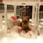 """Shaggie Chic Rosie"" by Shaggie Chic Pet Boutique"
