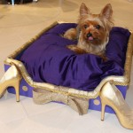 "Max luxuriating on the Second place bed:  ""The Stiletto Stroll"" by Roberta Stealy"